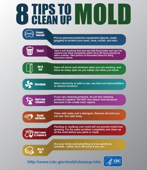 infographic-mold-english